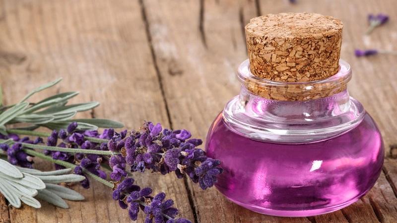 Bunga lavender dan minyak lavender