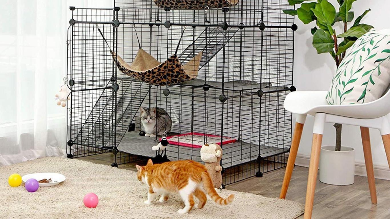 Cara Membersihkan Kutu Kucing